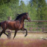馬ってどれくらい生きるの?!寿命は?