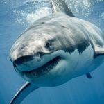 サメは長生きするの!?サメの寿命は?!