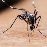 蚊の寿命って?!